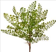 12er Pack Adiantumbusch 3-fach 34cm, grün ,Kunstblume / Kunstpflanze (9359108245800)