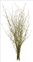 12er Pack Bambuszweigbund  80cm, natur ,Kunstblume / Kunstpflanze (9359109718030)