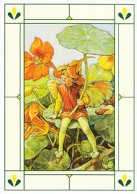 24er Pack Fee Grußkarte Flower-Fairy-Postkarten Kapuzinerkresse bunt Bildkarten (9359217061050)