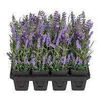 12er Pack Lavendel, ca 25cm im Kulturtopf 7x8cm, Kunstpflanzen (994929238806)