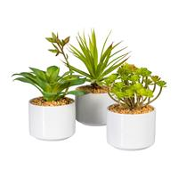 3er Pack Sukkulenten, ca 16-20cm in Keramikschale 10x8cm, Kunstpflanzen (994929982211)