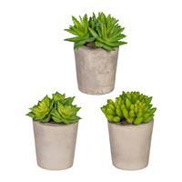 3er Pack Sukkulenten ca 11cm im Zementtopf 6,5x7cm, Kunstpflanzen (994929261217)