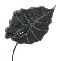 6er Pack Alocasienblatt ca. 30 cm, Kunstpflanze (994929852453)
