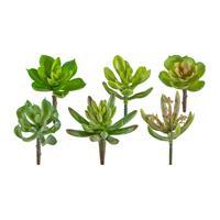12er Pack Sukkulente ca. 10cm, grün, Kunstpflanzen (994929095119)