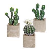 3er Pack Kakteen Mix, 20-22cm, grün im Zementtopf 9x9x9cm m. Erde, Kunstpflanzen (994929092699)