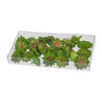 24er Pack Sukkulenten-Tischstreu,3+4cm grün, Kunstpflanzen (994929251508)